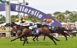 new-zealand-horse-racing